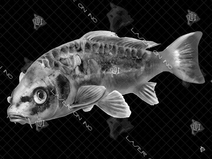 fish9650-sd - Laser On Inc