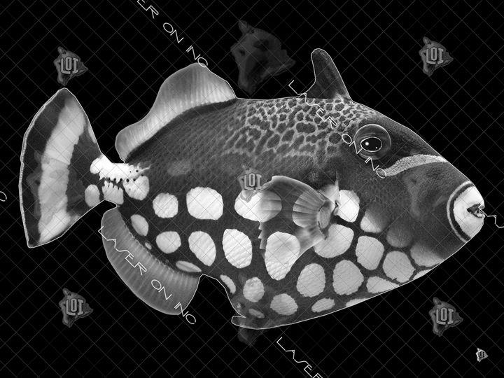 fish9735-sd - Laser On Inc