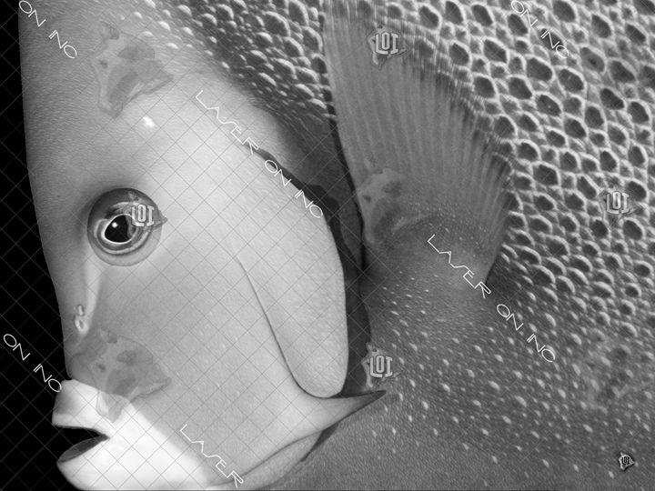fishhead-sd - Laser On Inc