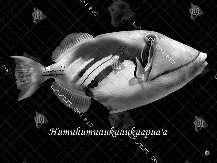 fish-humu-sd - Laser On Inc