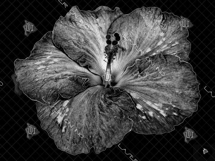 hibiscus1-sd - Laser On Inc