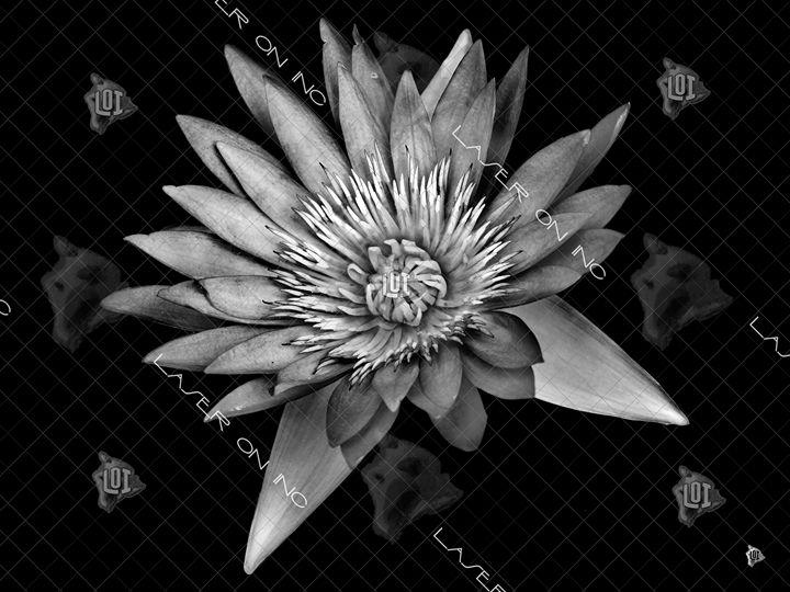 lotus-sd - Laser On Inc