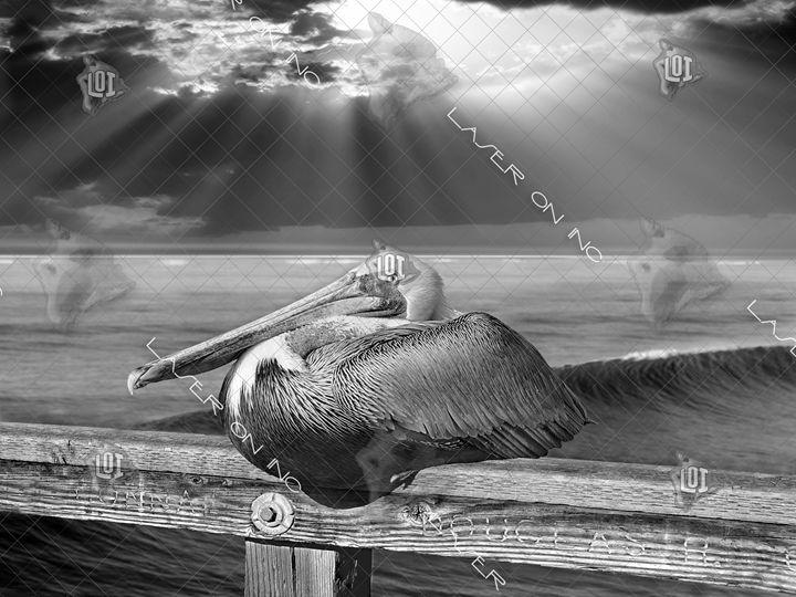 pelicanwave-sd - Laser On Inc
