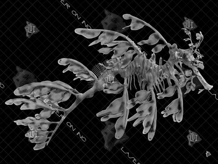 seahorse3-sd- - Laser On Inc