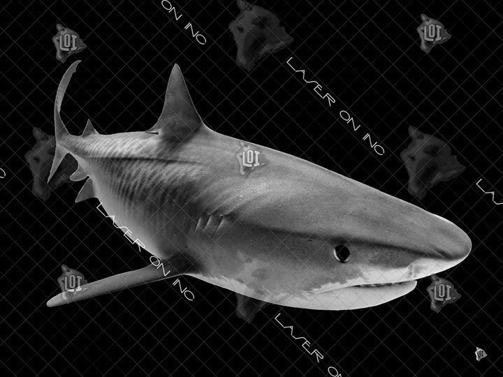 tiger-shark1-sd - Laser On Inc