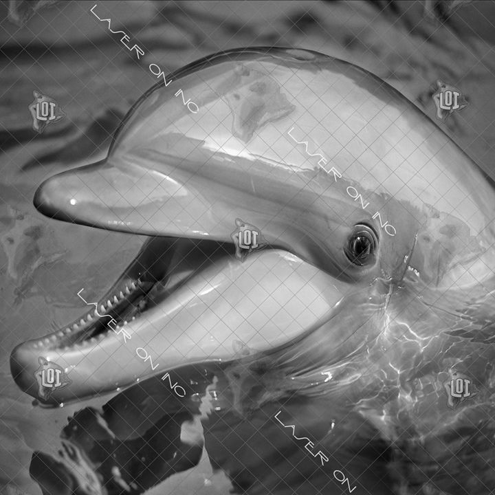 dolphinsmile-12in - Laser On Inc