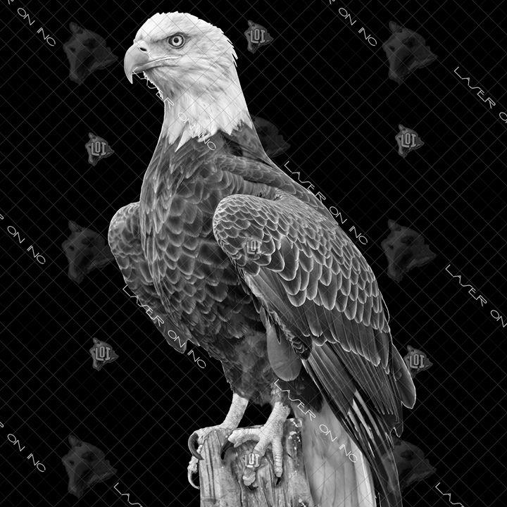 eagle_3-12in - Laser On Inc