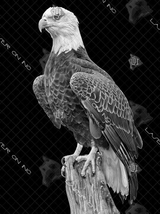 vertical-eagle_3-sd - Laser On Inc