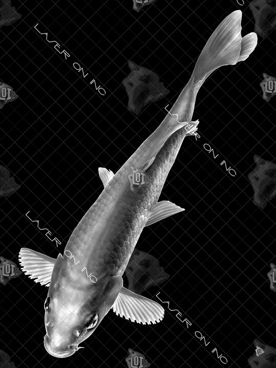 vertical-fish3680-sd- - Laser On Inc