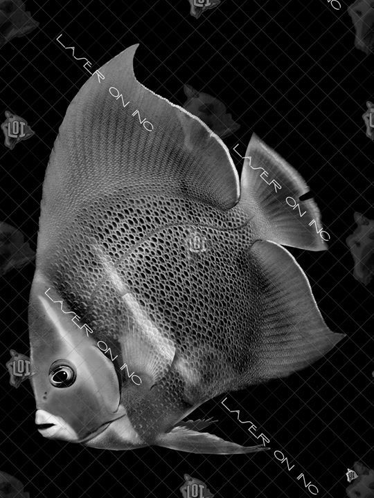 vertical-fish-7194-sd - Laser On Inc