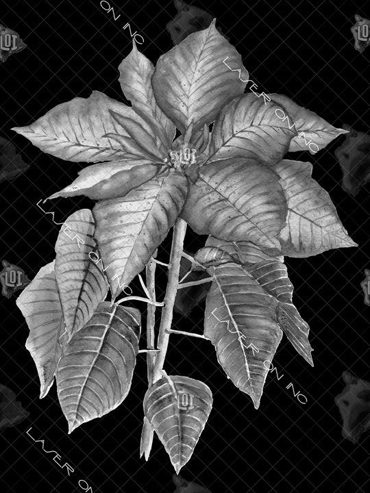vertical-flower-02-sd - Laser On Inc