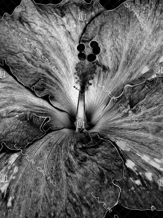 vertical-hibiscus2-sd - Laser On Inc