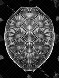 18 Inch x 24 Inch Glass Black Finish