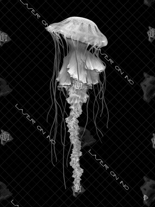 vertical-jellyfish1-sd - Laser On Inc
