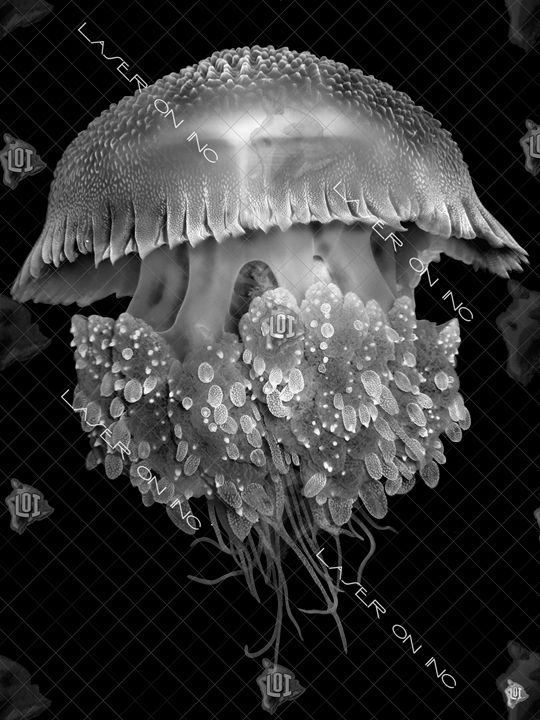 vertical-jellyfish2-sd - Laser On Inc