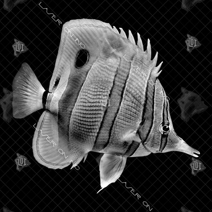 fish0243-12in - Laser On Inc