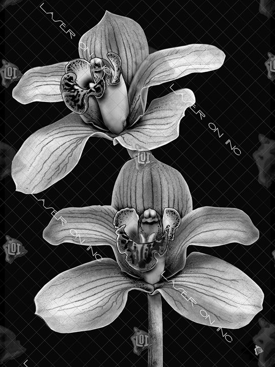 vertical-orchid-sd - Laser On Inc