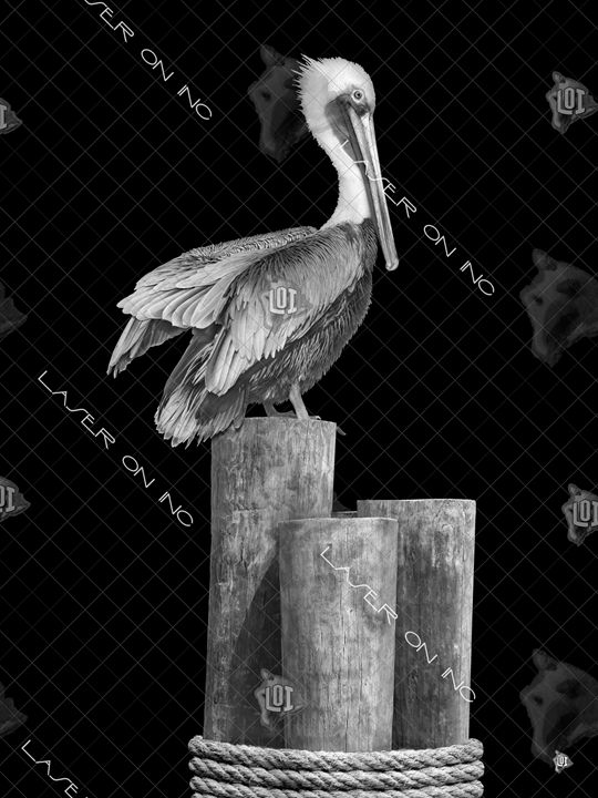 vertical-pelican1-sd - Laser On Inc