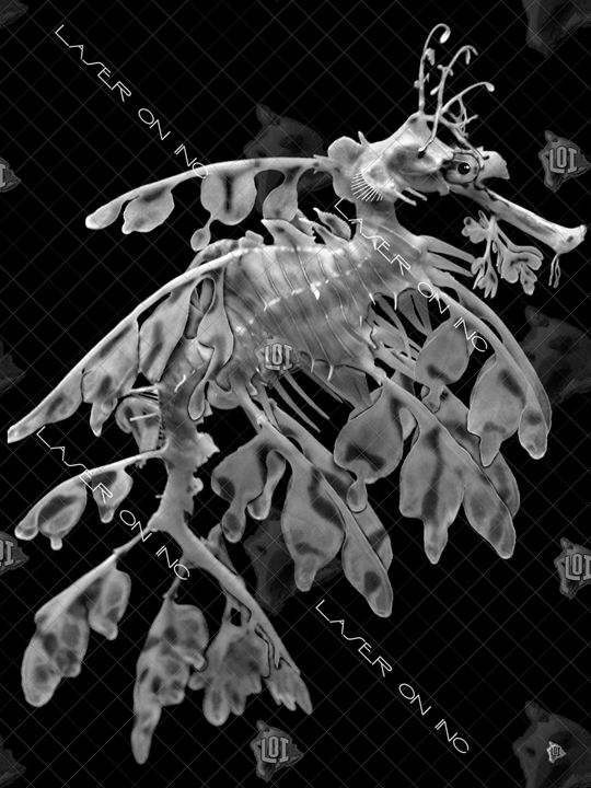 vertical-seahorse2-sd- - Laser On Inc