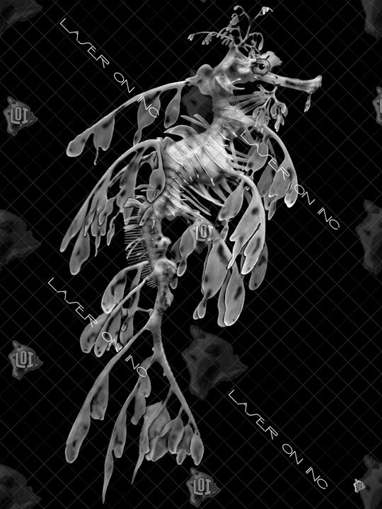 vertical-seahorse4-sd- - Laser On Inc
