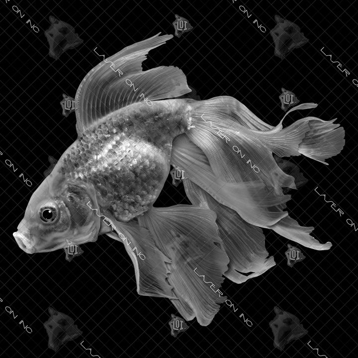 fish1339-x12.pspimage12 - Laser On Inc