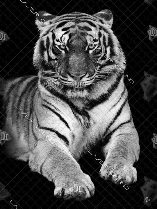 vertical-tiger-sd - Laser On Inc