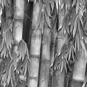 bamboo-forest12in