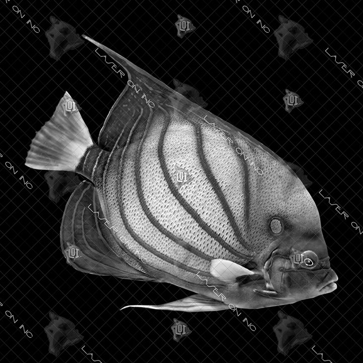 fish1561-12x12 - Laser On Inc