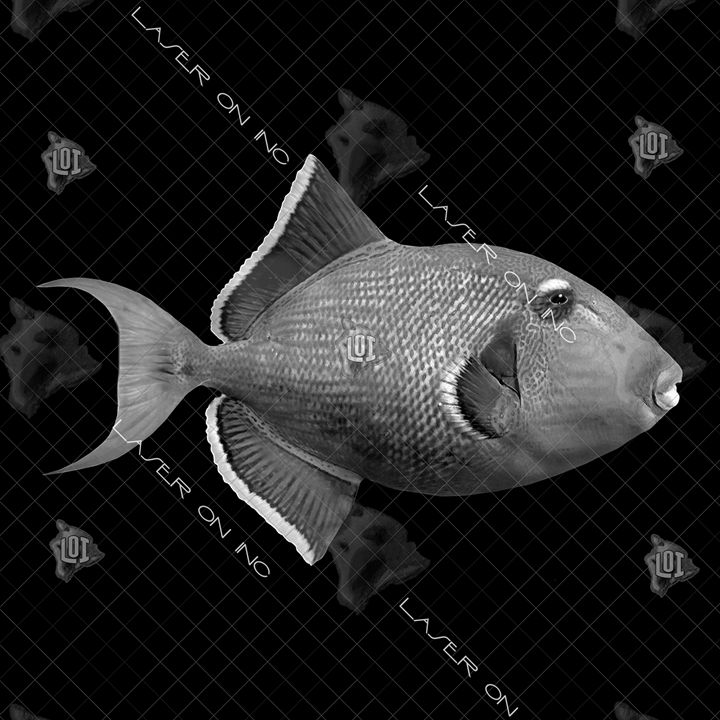 fish2107-12x12 - Laser On Inc