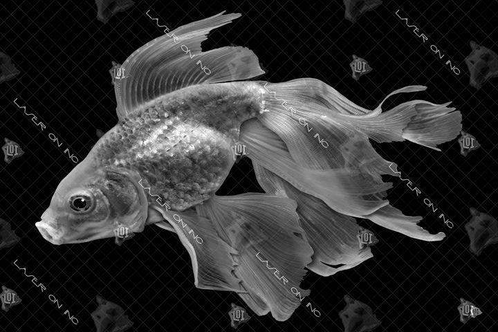 fish1339-24 - Laser On Inc