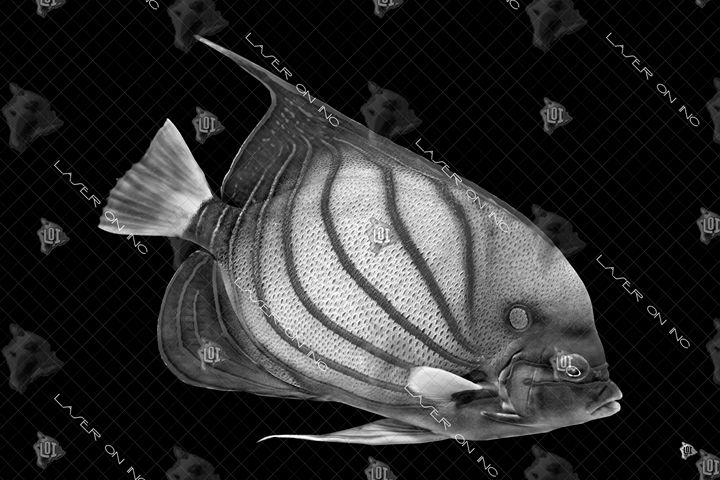 fish1561-24 - Laser On Inc