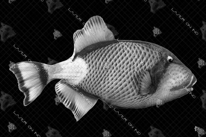 fish6475-24 - Laser On Inc