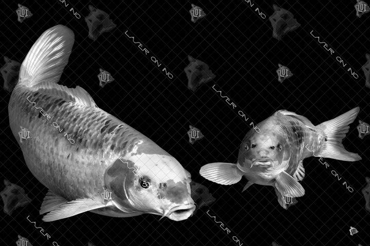 fish0965-24- - Laser On Inc