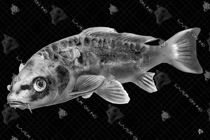 fish9650-24 - Laser On Inc