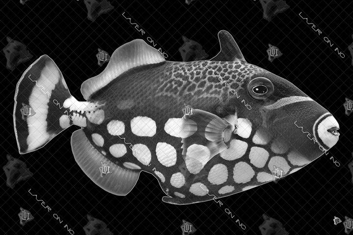 fish9735-24 - Laser On Inc