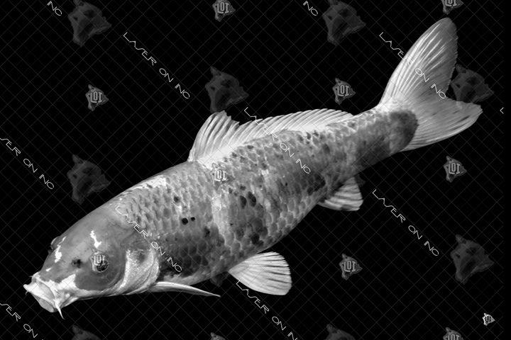 fish9878-24 - Laser On Inc