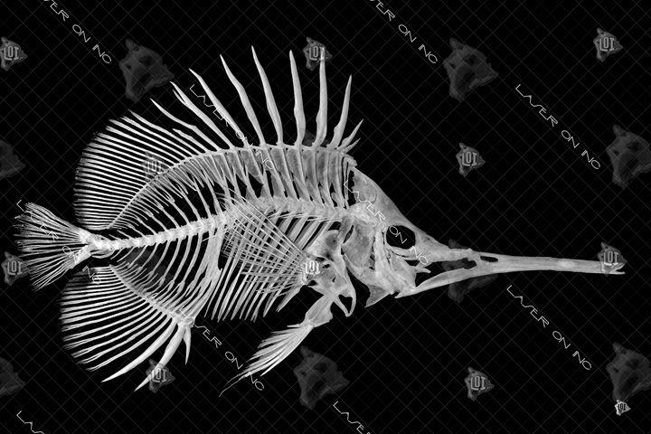 fishbone-24 - Laser On Inc