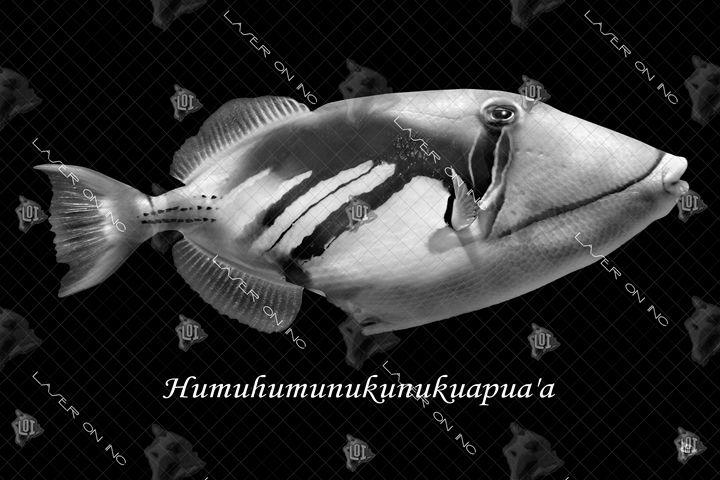 fish-humu-24 - Laser On Inc
