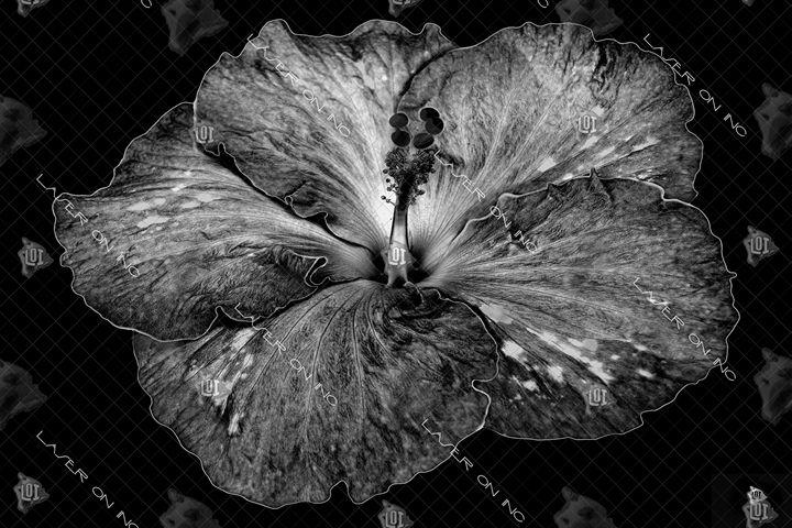 hibiscus1-24 - Laser On Inc