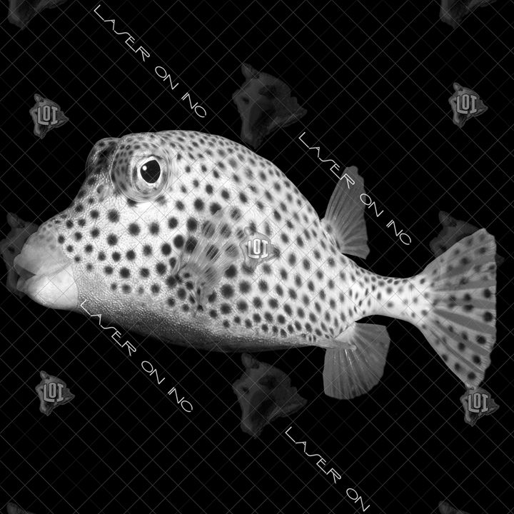 fish5227-12in - Laser On Inc