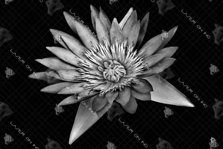 lotus-24 - Laser On Inc
