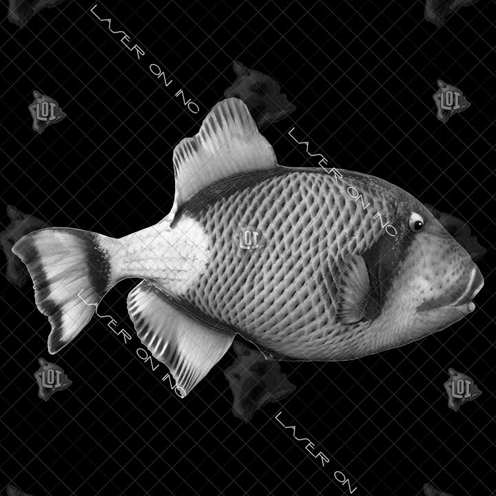 fish6475-12in - Laser On Inc