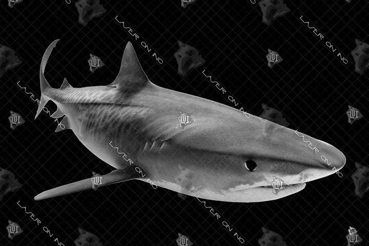 tiger-shark1-24 - Laser On Inc