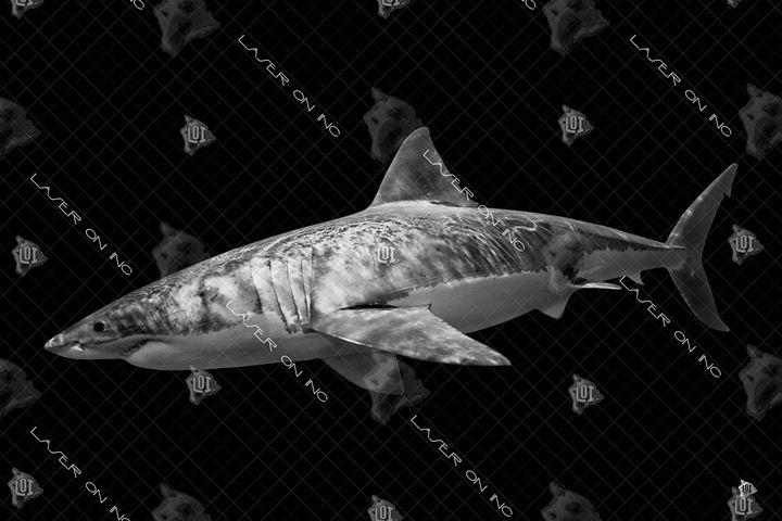 tiger-shark2-24 - Laser On Inc