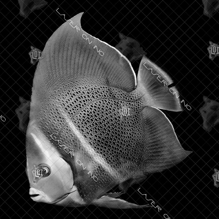 fish7194-12in - Laser On Inc