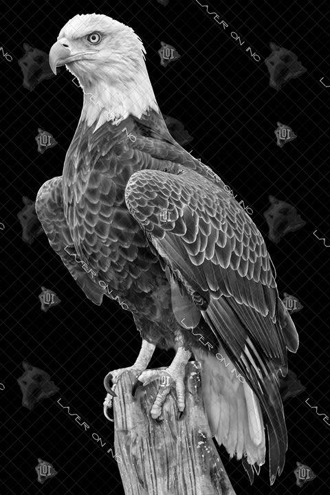 vertical-eagle_3-24 - Laser On Inc