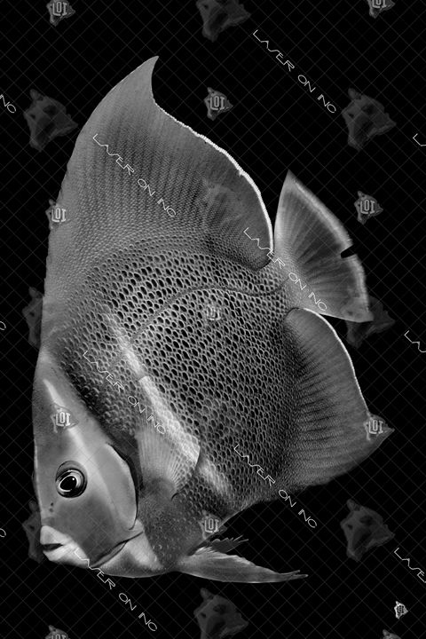vertical-fish7194-24 - Laser On Inc