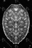 24 Inch x 36 Inch Glass Black Finish