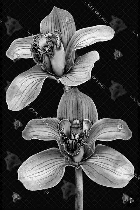vertical-orchid-24 - Laser On Inc