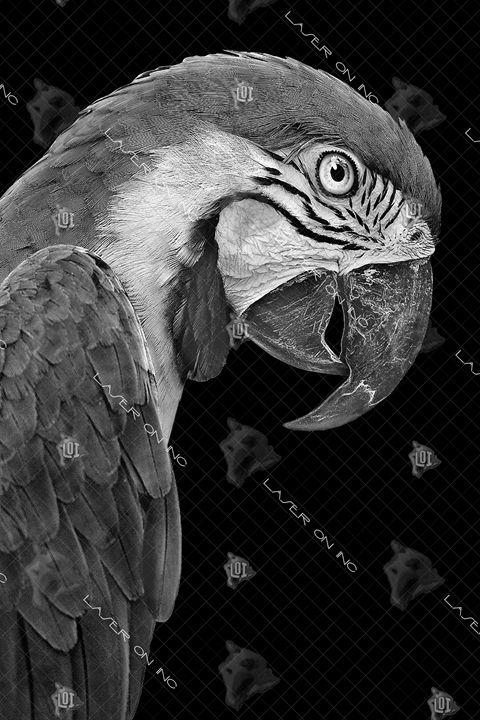 vertical-parrot1-24 - Laser On Inc